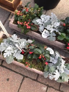 Winter Window Planters